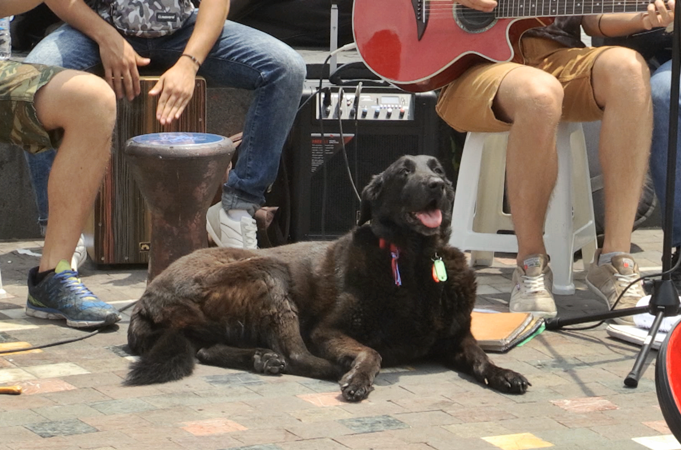 a dog in front of a street band film still unkown athenians